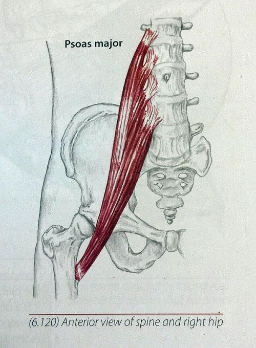 Bhip Your Hip Flexors Are Short Fix It
